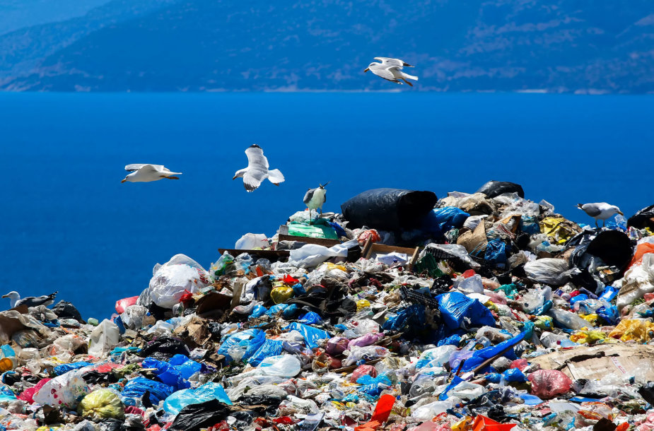 waste-disposal-site-with-seagulls-scavenging-for-food-5d84f1bbc1141.jpg